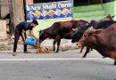 डीएम ने निराश्रित पशुओं के भरण पोषण के लिए जारी किये दो लाख