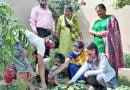 हरेला पर्व पर एसजीआरआर लालपानी में किया वृक्षारोपण