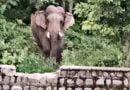 सनेह क्षेत्र में हाथियों का आतंक, कुंभीचौड़ में खेतों में घुसा हाथी