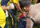 पहाड़ी से नीचे गिरा युवक, एसडीआरएफ और पुलिस ने किया रेस्क्यू