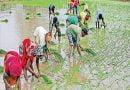 देश में किसानों की आय बढ़ोत्तरी पर सरकार गंभीर